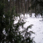 les_zima2