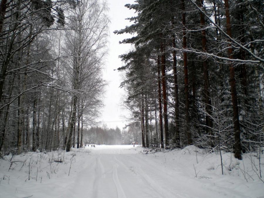 В лесу по 15 января 2014 г. Охота на лося.