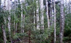 Охотничий сезон и непредсказуемая погода