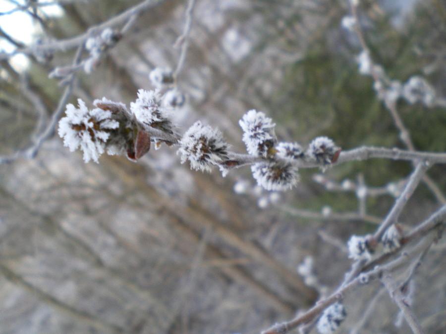 vesna-2015-pogoda-oxota-otdyx (1)