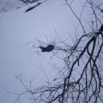 solnechnyj-fevral-oxota-dva-vystrela (11)