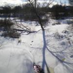 solnechnyj-fevral-oxota-dva-vystrela (16)