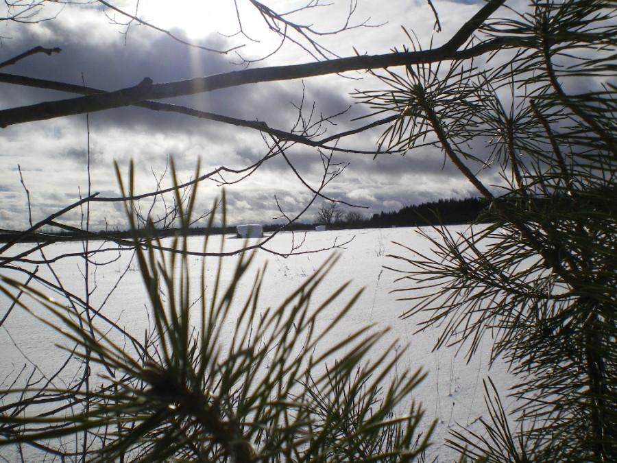 solnechnyj-fevral-oxota-dva-vystrela (22)