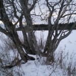 solnechnyj-fevral-oxota-dva-vystrela (19)