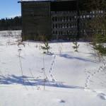 solnechnyj-fevral-oxota-dva-vystrela (3)