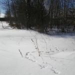 solnechnyj-fevral-oxota-dva-vystrela (4)