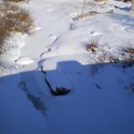 solnechnyj-fevral-oxota-dva-vystrela (8)