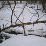 solnechnyj-fevral-oxota-dva-vystrela (9)