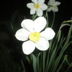 maj-u-kazhdogo-svoyo-prednaznachenie-(11)