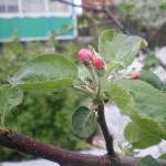 maj-u-kazhdogo-svoyo-prednaznachenie-(16)