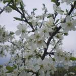 maj-u-kazhdogo-svoyo-prednaznachenie-(2)