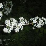 maj-u-kazhdogo-svoyo-prednaznachenie-(20)