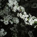 maj-u-kazhdogo-svoyo-prednaznachenie-(21)