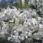 maj-u-kazhdogo-svoyo-prednaznachenie-(6)