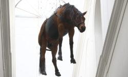 Зачем в ГМИИ им. Пушкина лошадь висит
