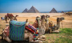 Посол Египта: Москва и Каир работают над возобновлением авиасообщения