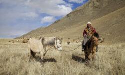 Вакцинированные россияне смогут посетить Монголию